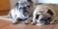 Missie and Boysie 3.jpg
