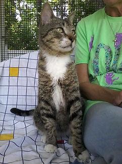 Thomas cat 3.jpg