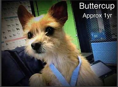 Buttercup 1.jpg