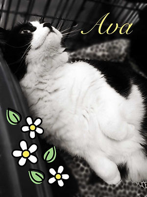 Ava cat 1.jpg