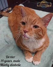 Dexter 4.jpg