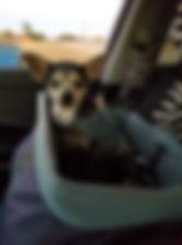 Roxie 3.jpg