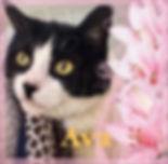 Ava cat 3.jpg