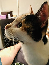 Kit Kat PA 2.2.jpg