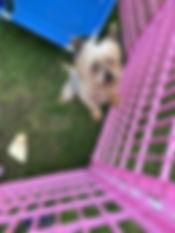 Gumball 2.jpg