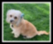 Zoey 1.jpg