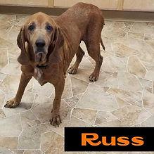Russ 2.jpg