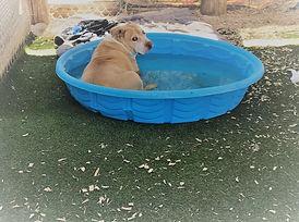 Candy Roo in pool.jpg
