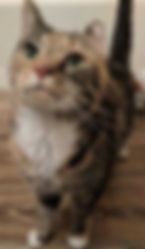 Annie 2.jpg
