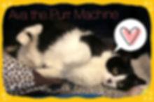 Ava cat 2.jpg