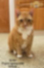 Dexter 1.jpg