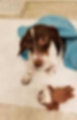 Cookie III 3.jpg
