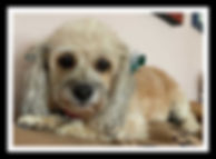 Zoey 2.jpg