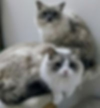 Holly and Molly 1.jpg