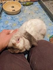 Charlie bunny 1.2.jpg