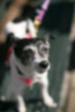 Pippi 3.jpg