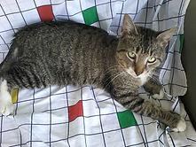 Thomas cat 1.jpg