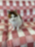 Callie MD 1.1.jpeg