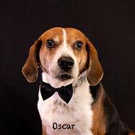 Oscar 3.3.jpg
