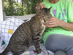 Thomas cat 2.jpg