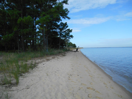 2021 Roaring Point Cleanup coming soon!
