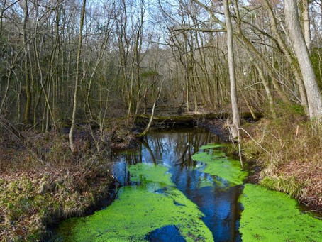 Federal policy change may threaten freshwater wetlands