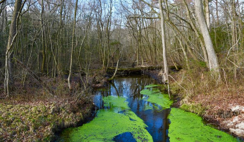 Wetlands – nontidal and tidal – are prevalent throughout Sussex County. The county has nearly half of all wetlands in Delaware. RON MACARTHUR PHOTO