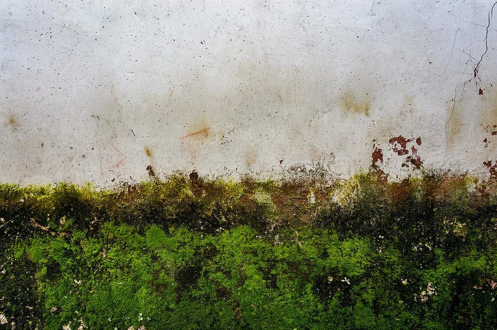 Mechova stena