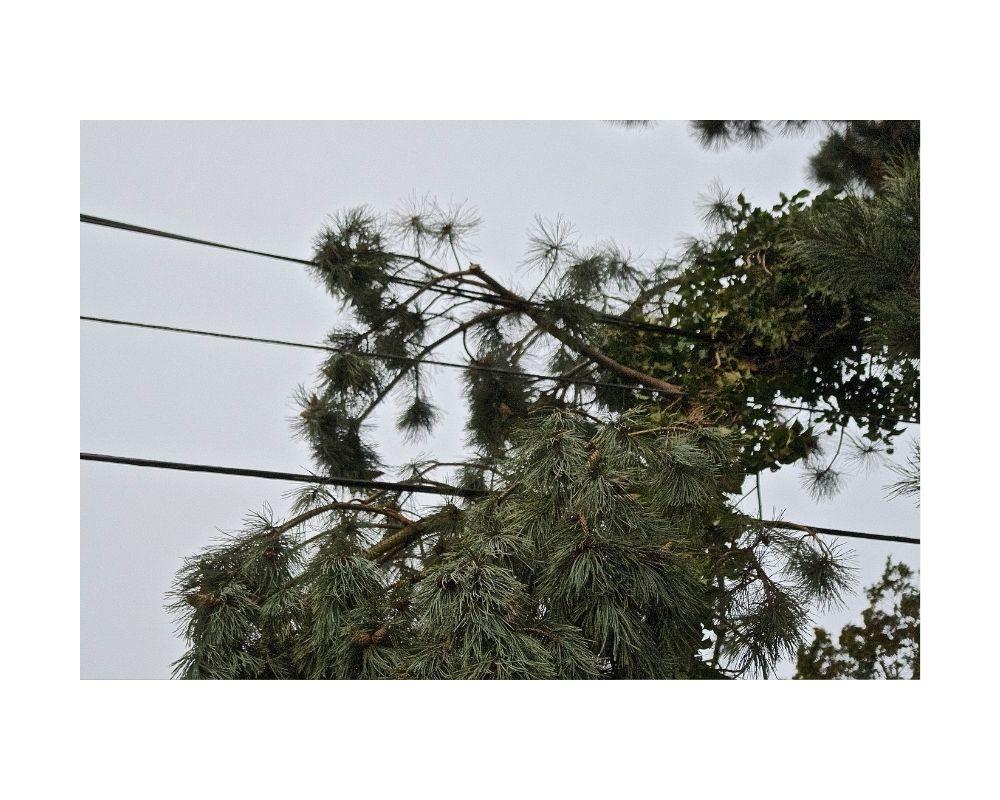 Trees on Power Lines - Larricks