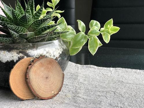 Silky Oak Coaster