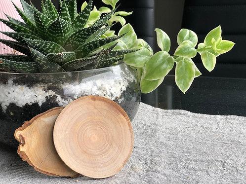 African Mahogany Raw Coaster