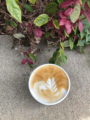 Latte plant.jpg