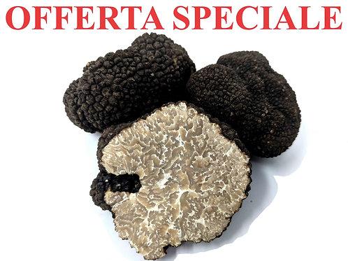 Tartufo Nero Uncinato Fresco  pezzatura media (5-12g)/Tuber Uncinatum Vitt.