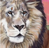 Thumbnail Lions Pride.png