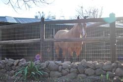 Outside Run of Small Barn