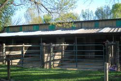 Outside Runs to Main Barn
