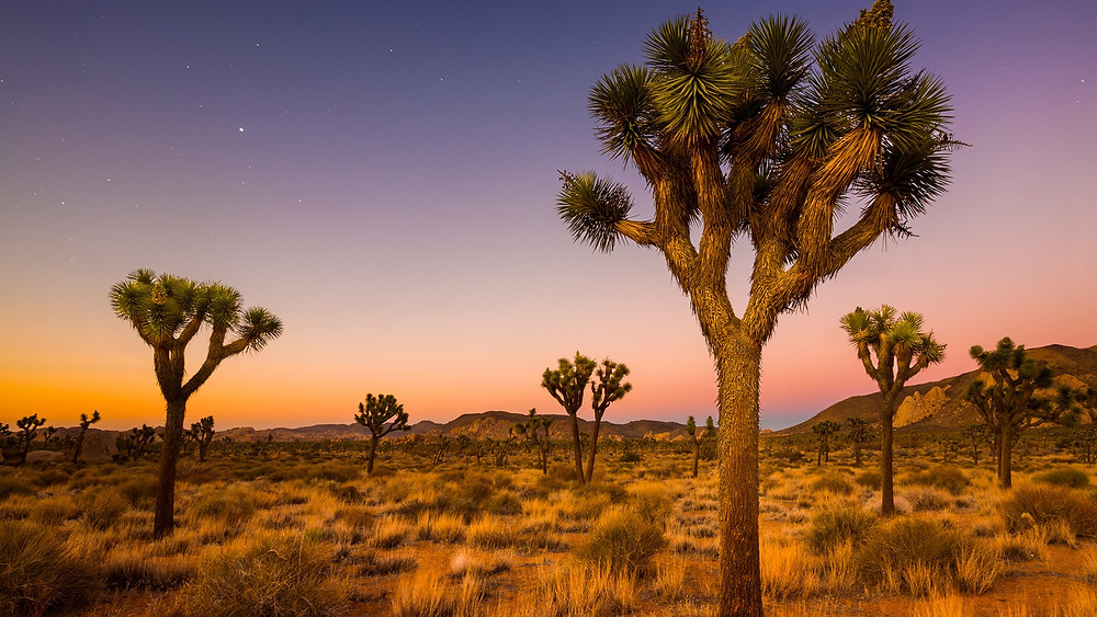 Litta Belle Campbell helped saved the Joshua Trees of the Mojave Desert