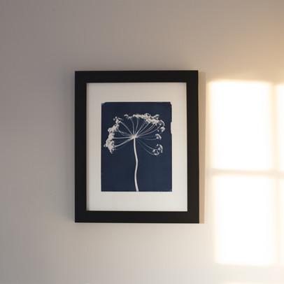 framed_fennel.jpg