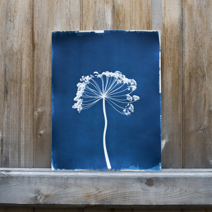 11x14-fennel.jpg