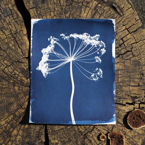 8x10-fennel.jpg