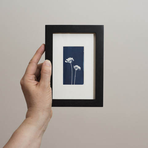 framed_fennel_card.jpg