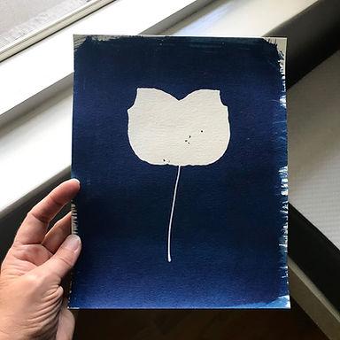 8x10-tulippoplar.jpg