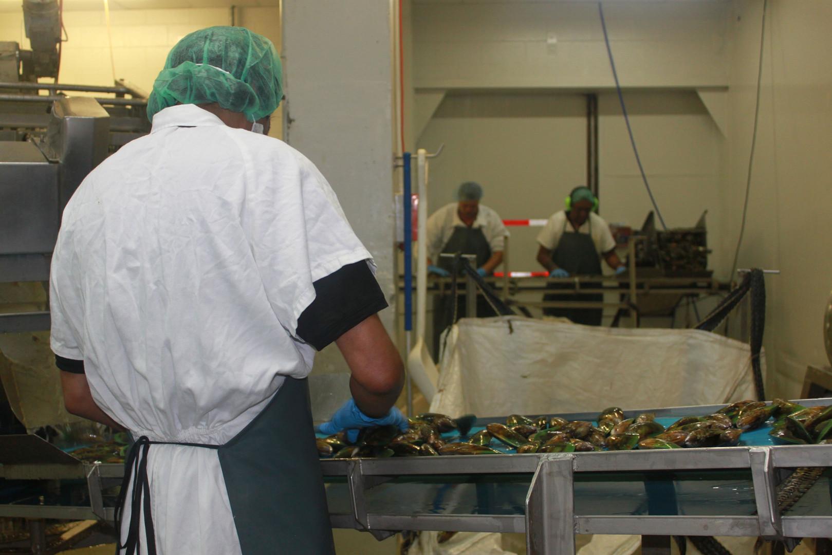 Mussel Factory Line