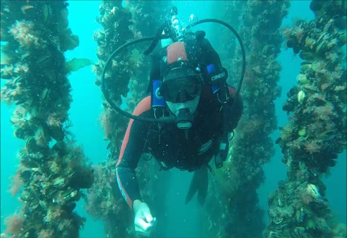 Diving for Mussels