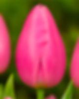 Pink-Twist.jpg