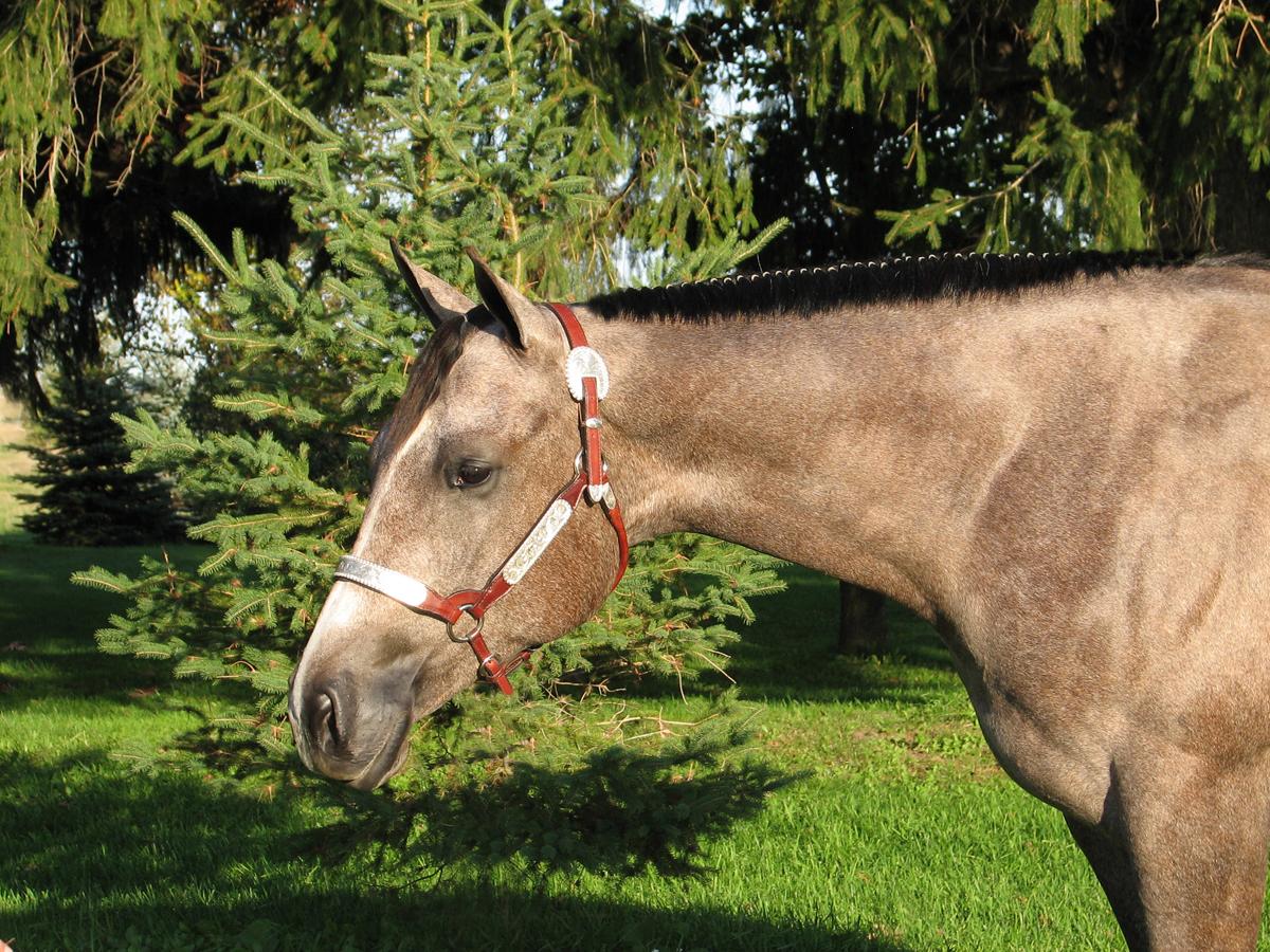 Jordan Oct 2006