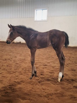 2020 When In Chrome Filly