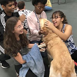 2019 Pet-A-Pup