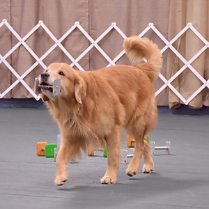 AKC Obedience Trial