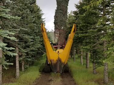 Preparing Trees for Transplanting